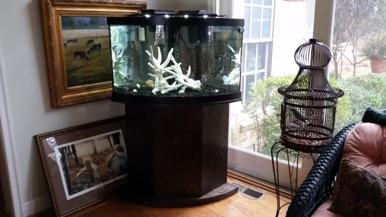 Behind the Scenes: 65 Gallon Corner Aquarium