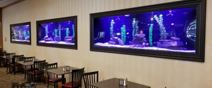 Behind the Scenes: Triple 200g Aquariums