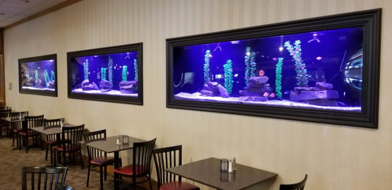 Behind the Scenes: Triple 200g Aquariums