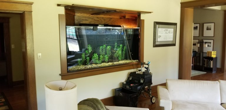 Behind the Scenes: 300 Gallon Wall Aquarium