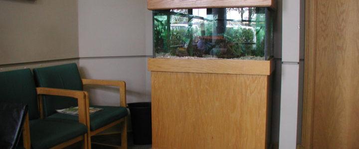 Behind the Scenes: 50g Aquarium in Dentist Office