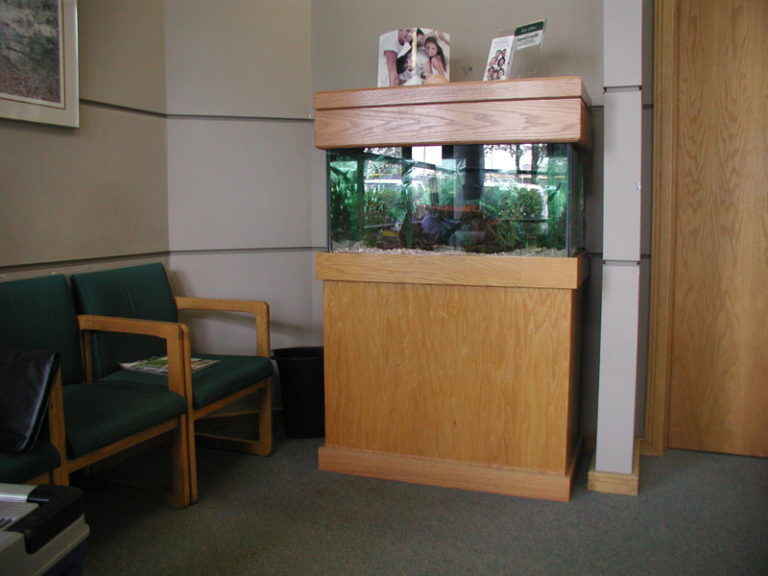 Behind the Scenes: 50g Aquarium in Dentist Office