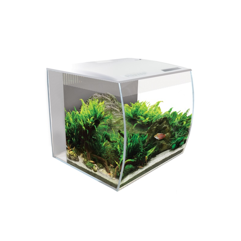 My Top Desktop Aquarium Pick for Christmas 2020, Why and How to Take Care of It.